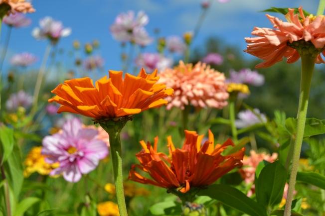 FlowerHaven.jpg