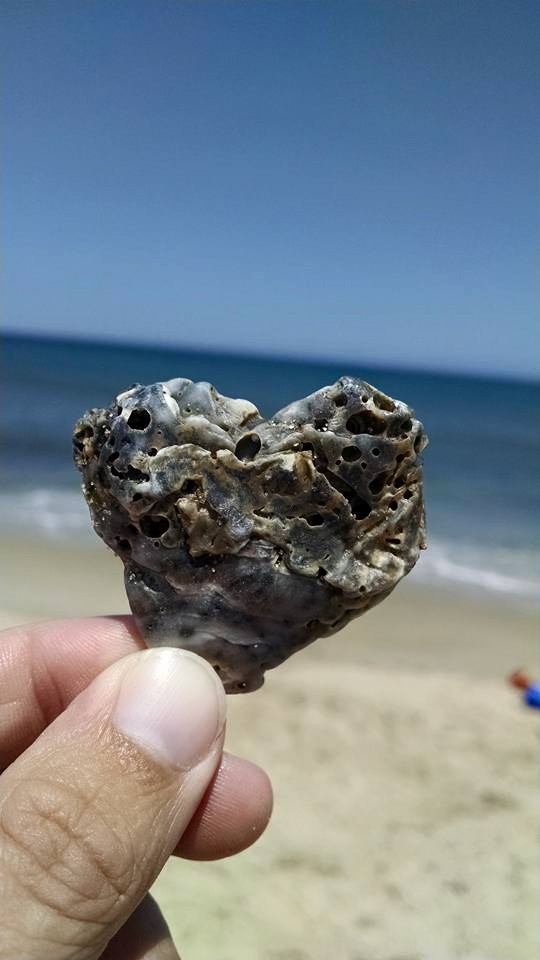 3rd year in a row we've found a heart shaped shell on the last day of vacation.